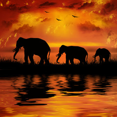 Elephants on a beautiful sunset background