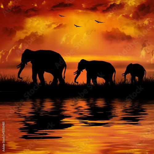 Elephants on a beautiful sunset background