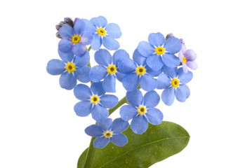 Forget me not..