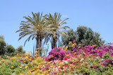Vibrant flowers in Fuerteventura, Canary Islands Spain poster