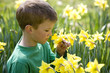 Young Boy Smelling Daffodil