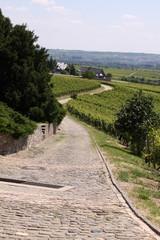Weinberge in Rheinhessen