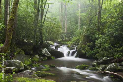 Smoky Mountains - 15521262
