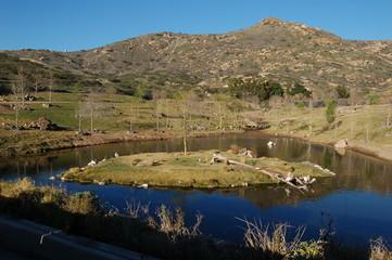 Wildlife & Lake