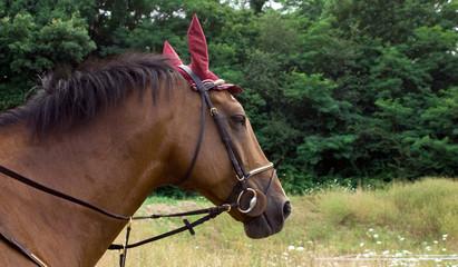 Cavallo doc