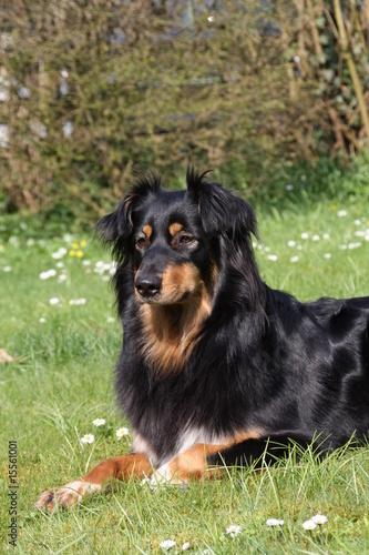 schwarzer Hund © Antje Lindert-Rottke