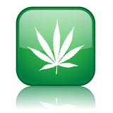 Square button with Cannabis Leaf symbol (green)