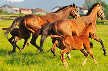 horse nature