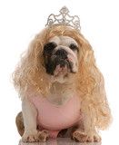 bulldog dressed up as princess with ugly wig and tutu poster