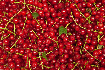 many red currants on ripes