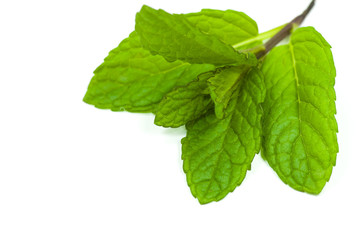 mint leafs on white background
