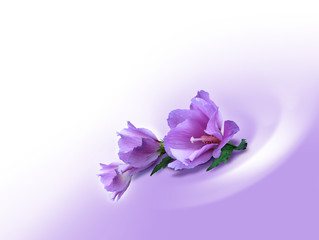 violet background-flowers