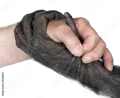 handshake between Human hand and monkey hand