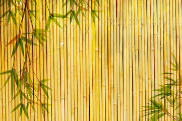 frame of bamboo-leaves background.