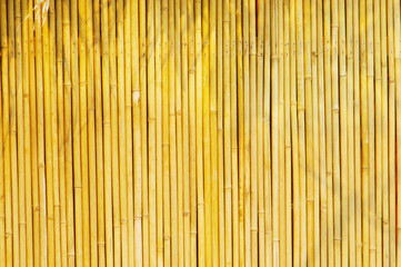Golden bamboo Background