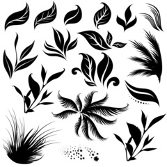 Set of leafs and plants design elements
