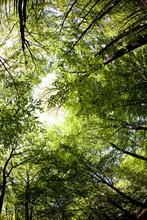 Automne Treetops