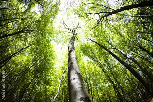 Leinwanddruck Bild Forest