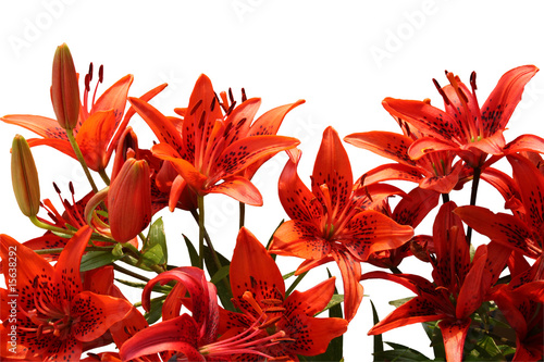 Bouquet of Tiger lilies