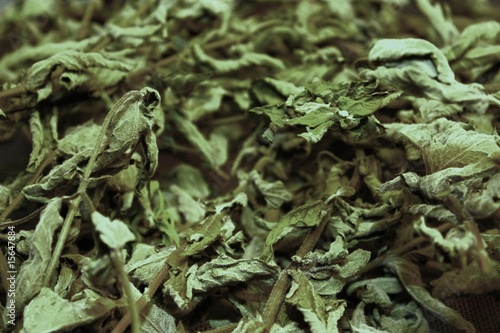 Dried mint plant leaves.