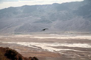 burd flyind above white salt fields - Death Valley national park