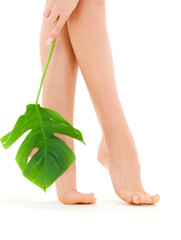 female legs with green leaf