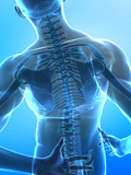 human x-ray spine cocncept poster