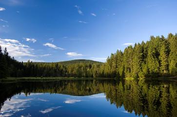 Fichten spiegeln sich in See an herrlichem Sommertag