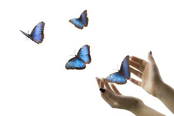 farfalle blu in volo libero