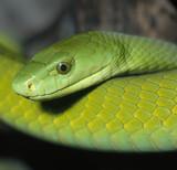 Fototapete Gefahr - Schönheit - Reptilien / Amphibien