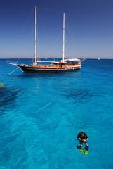 Red Sea diver