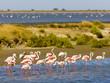 Leinwandbild Motiv flamingos, Parc Regional de Camargue, Provence, France