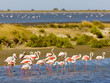 Leinwanddruck Bild - flamingos, Parc Regional de Camargue, Provence, France