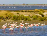 Flamingók, Parc Regional de Camargue, Provence, Franciaország
