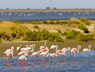 flamingos, Parc Regional de Camargue, Provence, France © PHB.cz