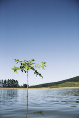 A sapling in the water