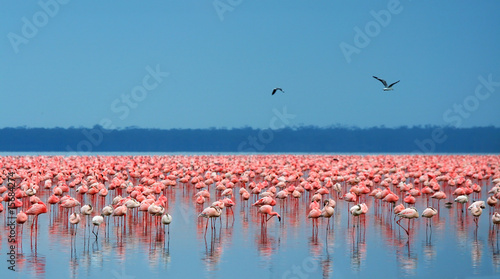 Fotobehang Flamingo flocks of flamingo