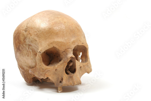 Skull isolated