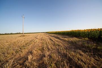 campi di girasole