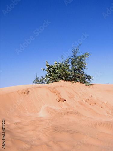 Tuinposter Algerije Sahara