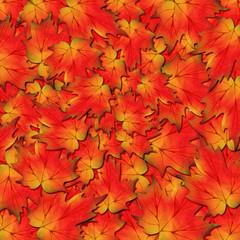 Autunno foglie-Autumn Leaves-Feuilles D'Automne-2