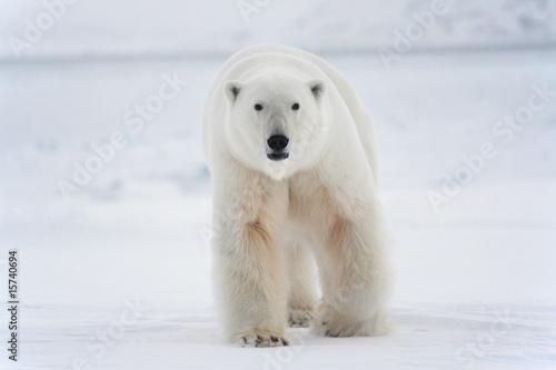 Plexiglas Ijsbeer Polar bear