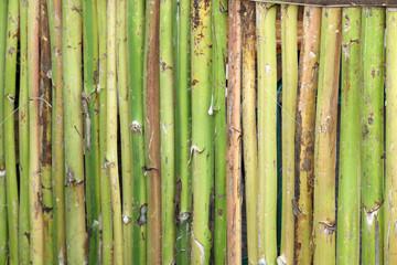 clôture naturelle avec des hampes d'agaves