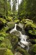 Wasserfälle - Triberg - Schwarzwald