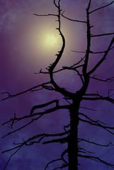 luna evanescente