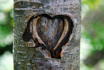 Coeur d'écorce