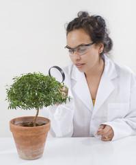 scientist lab plant