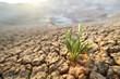 Green grass growing through dry cracks in desert land - 15768007