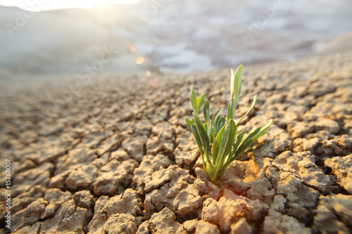 Green grass growing through dry cracks in desert land - 15768007