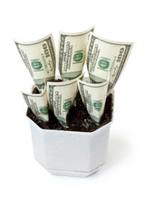 Money grows in a flowerpot isolated